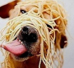 Spaghetti on dog head